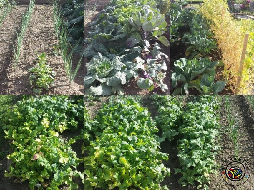Collage Omas Garten Ende Juni