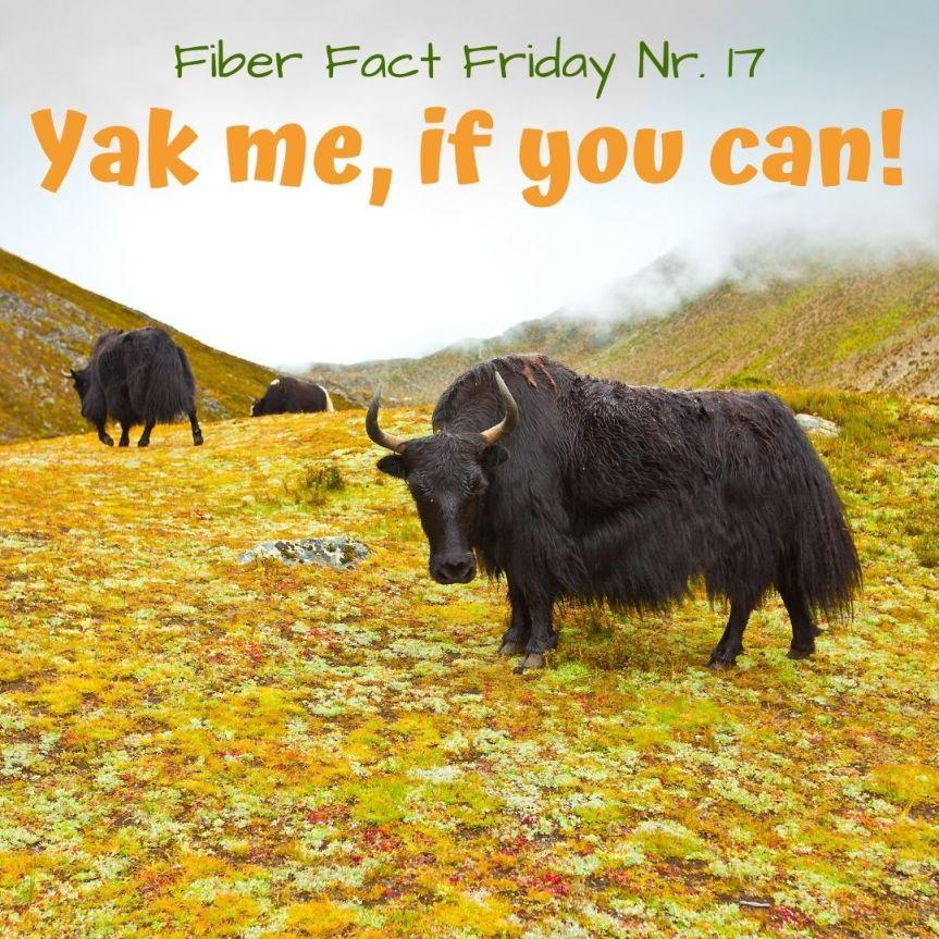 Fiber Fact Friday Nr. 17 : Yak me, if youcan